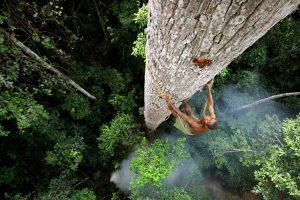 explorer climbing a tree